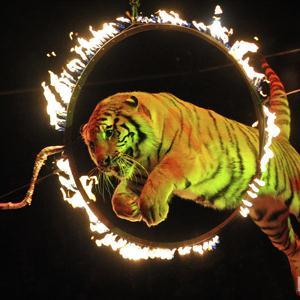 Цирки Армавира