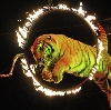 Цирки в Армавире
